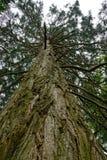Ett träd på Escot, Devon Arkivfoto
