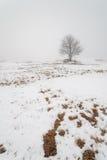 Ett träd på ett dimmigt vinterfält. Arkivfoton