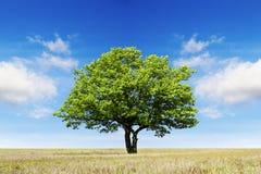 Ett träd på fältet under himlen med ovanliga moln royaltyfria foton
