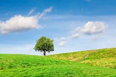Ett träd på gröna kullar under himlen med ovanliga moln arkivfoto