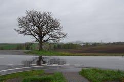 Ett träd på milda sju kullar Biei Hokaido Japan Arkivfoto