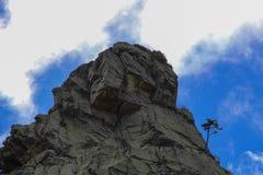 Ett träd på mounatinöverkanten Royaltyfri Foto