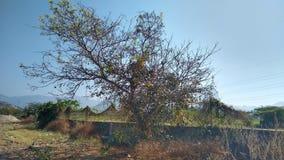 Ett träd royaltyfri bild