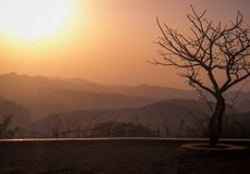 Ett träd på solnedgången med inga sidor men enda filialer arkivfoton