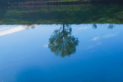 Ett träd reflexed i lite sjön Royaltyfria Bilder