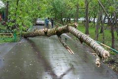 Ett träd som är brutet vid en orkan i Moskva Royaltyfria Bilder