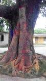 Ett träd som färgas i helig festival Arkivbild