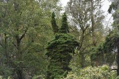 Ett träd som ser som kaninens huvud Arkivfoton