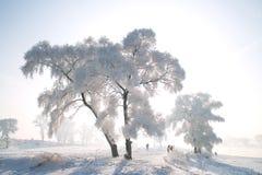Ett träd som täckas med glasyr Arkivbilder