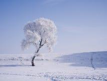 Ett träd som täckas med glasyr Royaltyfri Foto