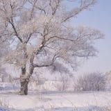 Ett träd som täckas med glasyr Royaltyfria Bilder
