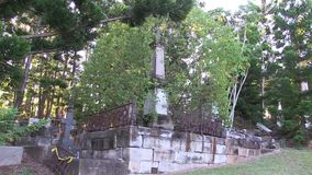 Ett träd som växer i en gammal grav lager videofilmer