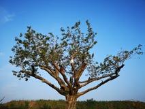 Ett träd står i morgonen arkivbilder