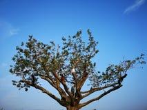Ett träd står i nedgången under den blåa himlen fotografering för bildbyråer