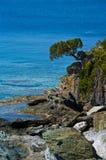 Ett träd vaggar på med havet Arkivbilder