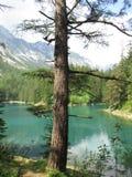 Ett träd vid sjön i berglandskap Royaltyfri Bild