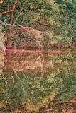 Ett träds reflexion Royaltyfria Bilder