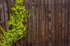 Ett trästaket som vävas med, piskar Bakgrund Natur Arkivfoto