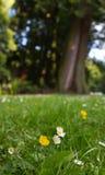 Ett trevligt bottenlägeskott av några små blommor med en suddig bakgrund i Vancouver, Kanada Royaltyfria Bilder