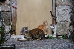 Ett trevligt familiy av katter arkivfoto