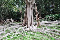 Ett tropiskt unikt träd royaltyfria foton