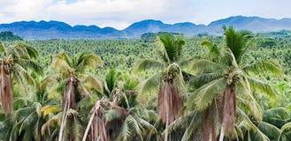 Ett typisk Filippinernalandskap av kokosnöten gömma i handflatan och berg royaltyfria foton