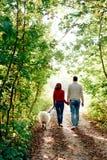 Ett ungt par med en hund som promenerar hösten, parkerar henne är i en röd tröja som han är i vit med en skrovlig samoyedhund royaltyfria foton