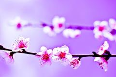 Ett uns av blommor i vår, som ett symbol av fred royaltyfri foto