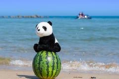 Ett välfyllt leksaksammanträde för gullig panda på en hel vattenmelon på stranden med det blåa havet i sommar royaltyfria foton