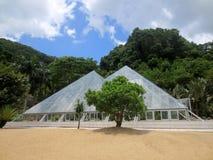 Ett växthus i den shenzhen botaniska trädgården fotografering för bildbyråer