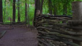 Ett vide- staket i skogen arkivfilmer