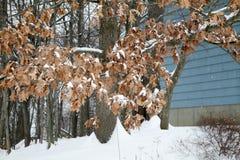 Ett vinterträd Arkivfoto
