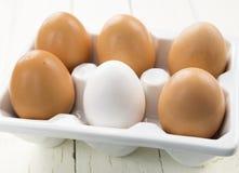 Ett vitägg Amongst bruna ägg Arkivbild