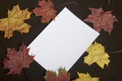 Ett vitt ark av fotografiskt papper på en mörk bakgrund bland de vissna höstsidorna av guling, rött och grönt Fotografering för Bildbyråer