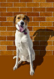 Ett vitt hundsammanträde Royaltyfria Bilder