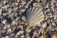 Ett vitt skal över sand på kusten arkivfoton