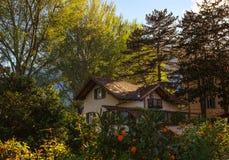 Ettberättelse hus i poppelludd Fotografering för Bildbyråer