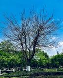 Ettsäsongsbetonat träd royaltyfri foto