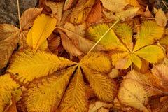 Etude осени от упаденного leavesd Стоковая Фотография RF
