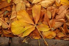 Etude осени от упаденных листьев Стоковые Фото