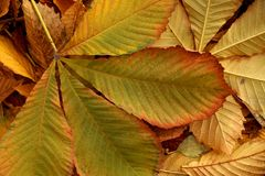 Etude осени от упаденных листьев Стоковые Изображения