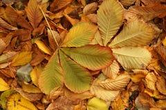 Etude осени от упаденных листьев Стоковая Фотография RF