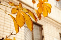 Etude осени с листьями дерева Стоковая Фотография