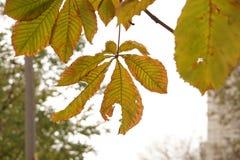 Etude осени с листьями дерева Стоковое фото RF