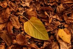 Etude del otoño de las hojas caidas Imágenes de archivo libres de regalías