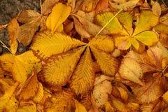 Etude del otoño de las hojas caidas Fotos de archivo libres de regalías