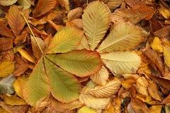 Etude del otoño de las hojas caidas Fotos de archivo