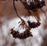 Etude della neve di inverno Fotografia Stock Libera da Diritti