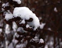 Etude della neve di inverno Fotografia Stock