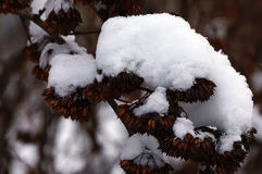 Etude della neve di inverno Immagini Stock Libere da Diritti